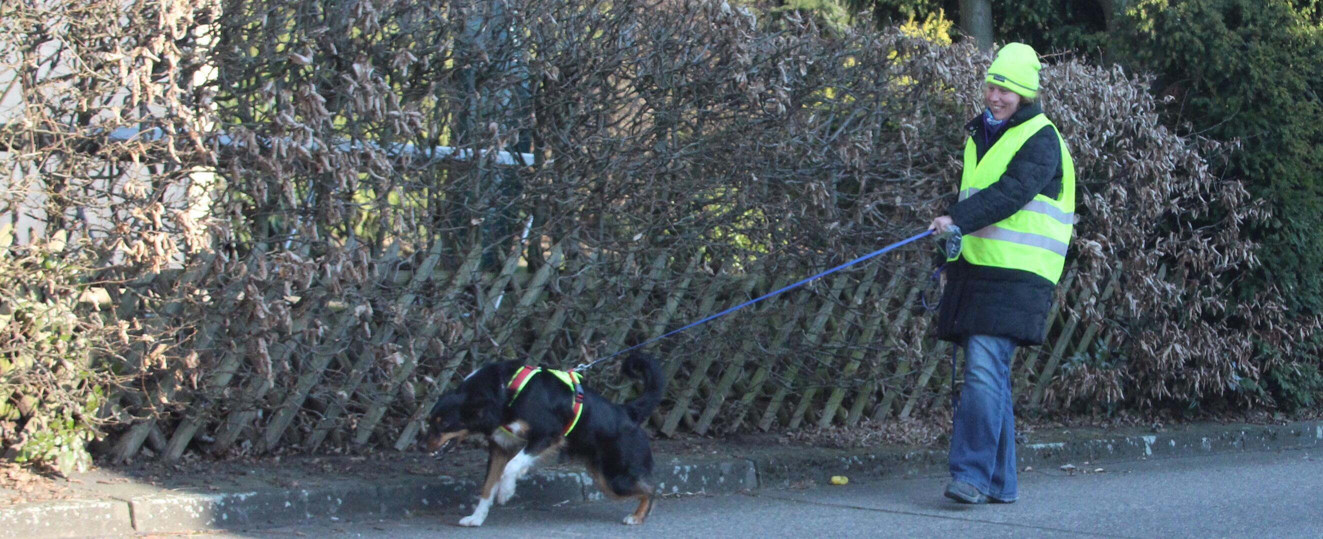 Suchhund Feline beim Trailen