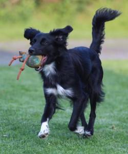 Suchhund Milka