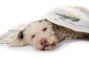 Suchhunde in der Presse