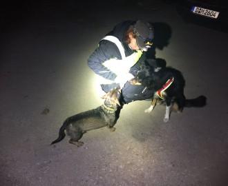 blinder Dackelrüde Nugget mit Suchhund Feline